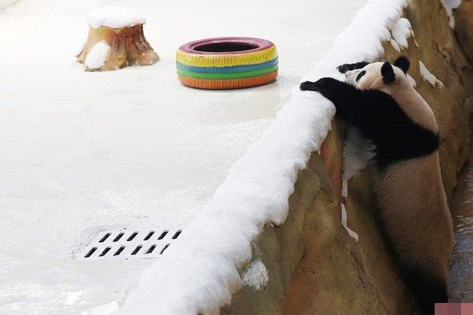 Panda Park (Zi Qin Lake) Tour/Nanjing