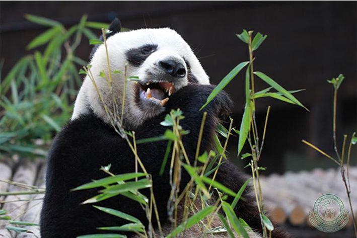치앙마이 동물원 & 아쿠아리움 입장권