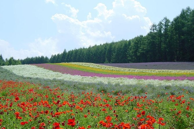 Furano and Biei One-Day Tour by Chartered Vehicle from Sapporo