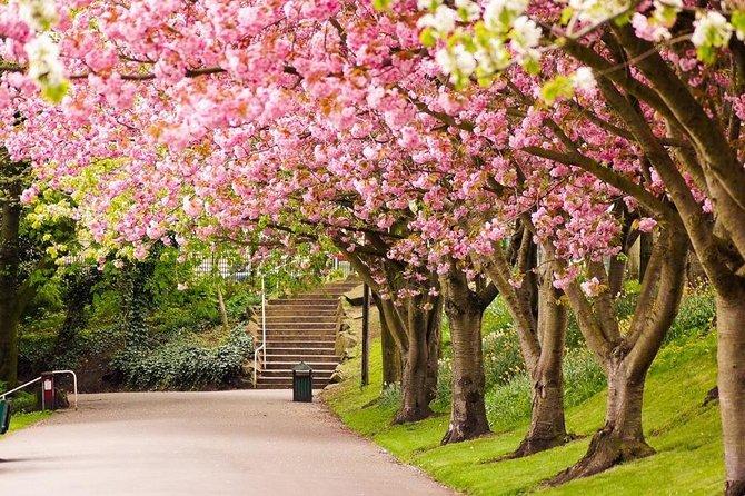 Bogor Highland Private Tour: Tea Plantation, Flower Garden, and Cibodas Park