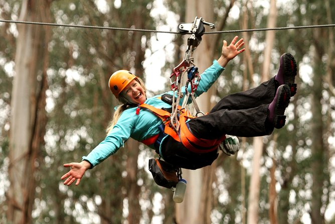 Otway Fly Treetop Adventures Admission Including Zipline Tour