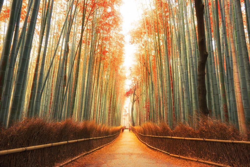 Kyoto & Arashiyama & Todai-ji Temple & Nara-Park One Day Tour