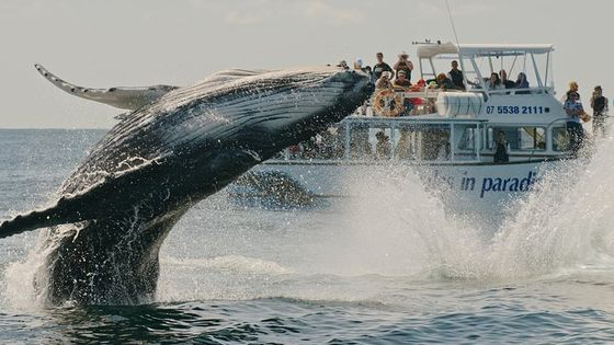 Whale Watching and Surfers Paradise Day Trip from Brisbane