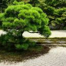Kyoto: Zen Garden, Zen Mind (Small Group)