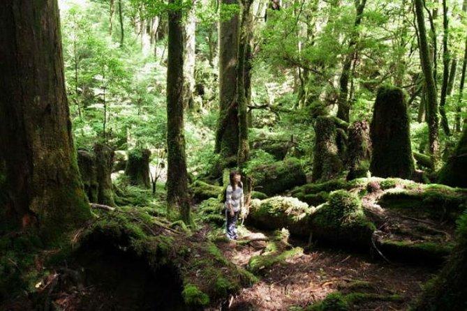 Yakushima Island Walking Tour of Yakusugi Cedar Forest