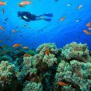 PADI Scuba Diving in Tunku Abdul Rahman Marine Park from Kota Kinabalu