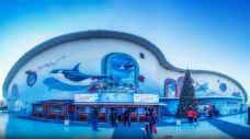 哈尔滨极地公园·海洋馆-哈尔滨
