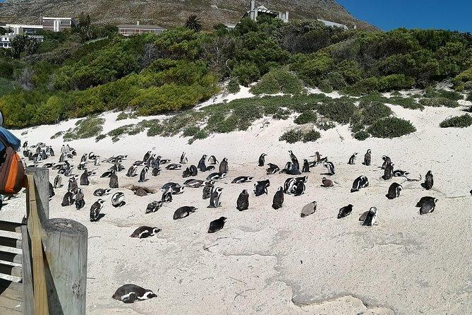 Private Tour - Cape Peninsula