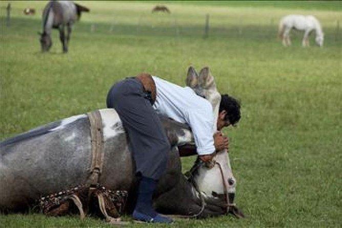 Small-Group Gaucho Day at a Farm in San Antonio de Areco