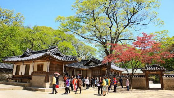 Changdeokgung Palace, Secret Garden & National Museum Tour [With Hotel Pick up]