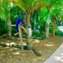 Miami City Tour and Jungle Island Admission Combo
