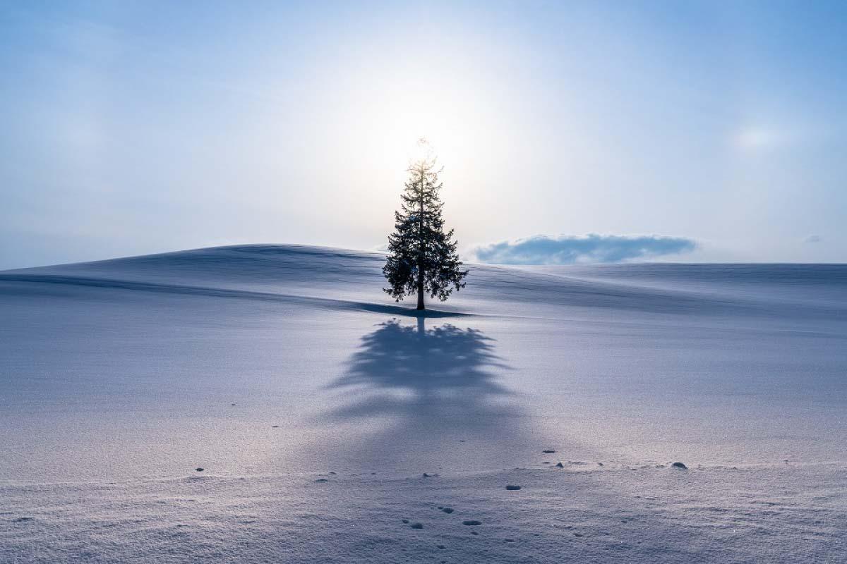 北海道小樽+北一硝子館一日遊(白色戀人公園/旭川/洞爺湖/登別/聖誕樹)
