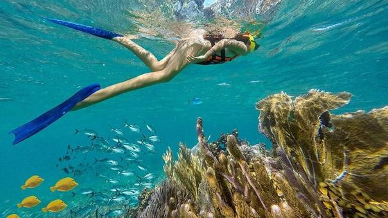 Puerto Morelos Reef Snorkeling Tour with Lunch