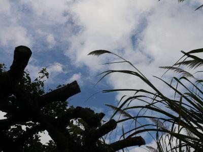 Chengmai R & F Mangrove Wetland Park