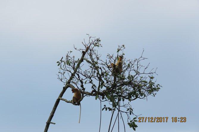 Brunei Proboscis Monkey River Safari