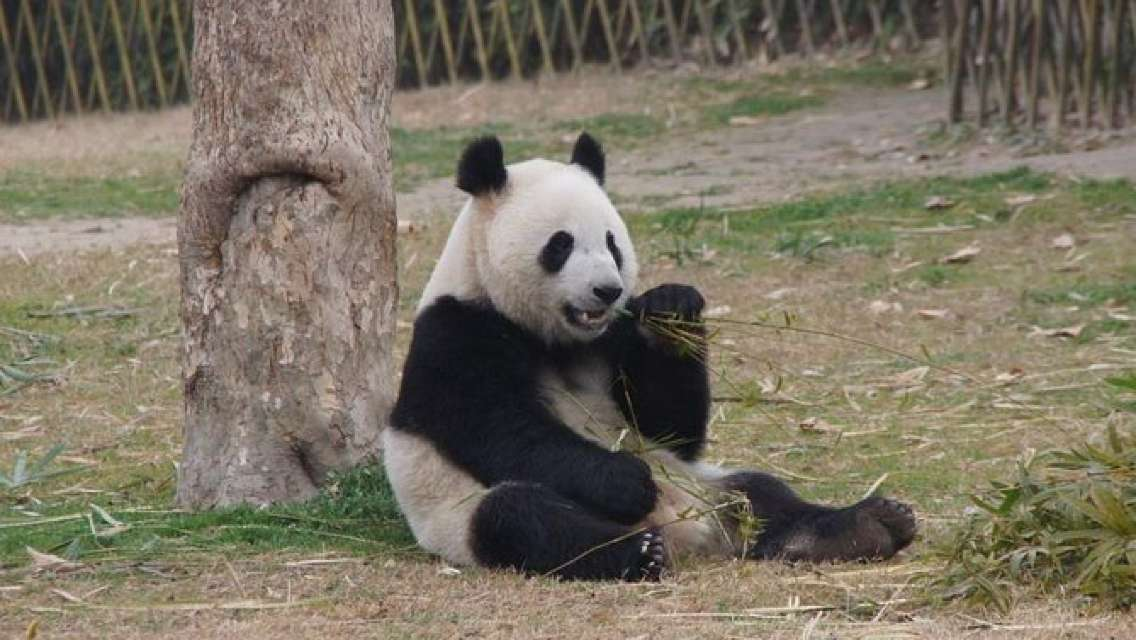 Private Transfer between Shanghai Wild Animal Park and City Hotels