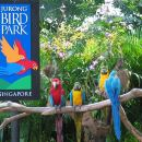 Jurong Bird park with transfers