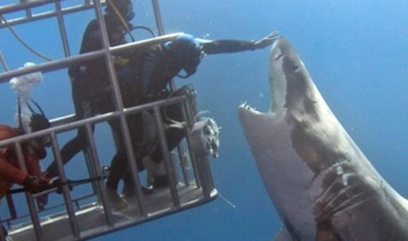 南非莫塞爾貝鯊魚籠潛半日遊(籠子里入海看鯊魚)