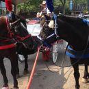 Philadelphia Horse Drawn Carriage Tour