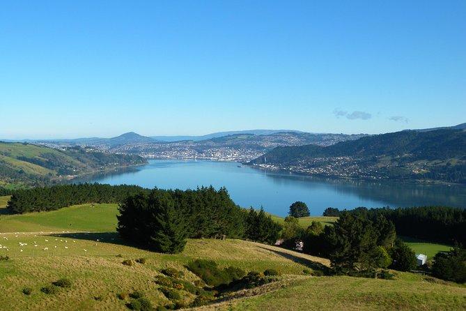 Otago Peninsula Scenery and Dunedin City Highlights Tour