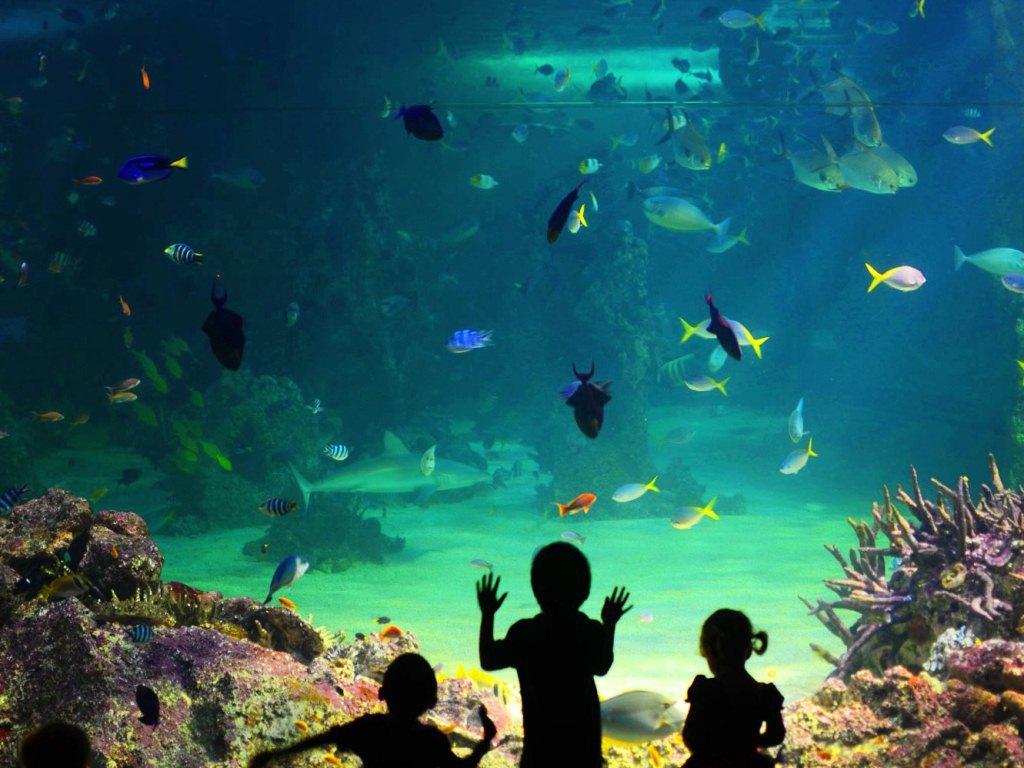 凱利塔頓海底世界門票