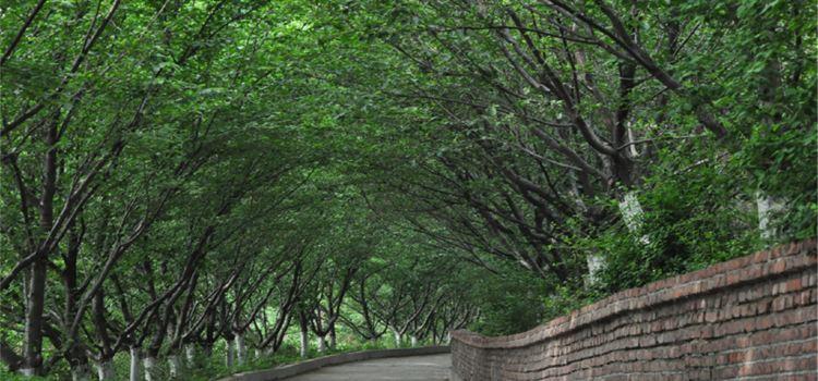Sakura Mountain Scenic Spot