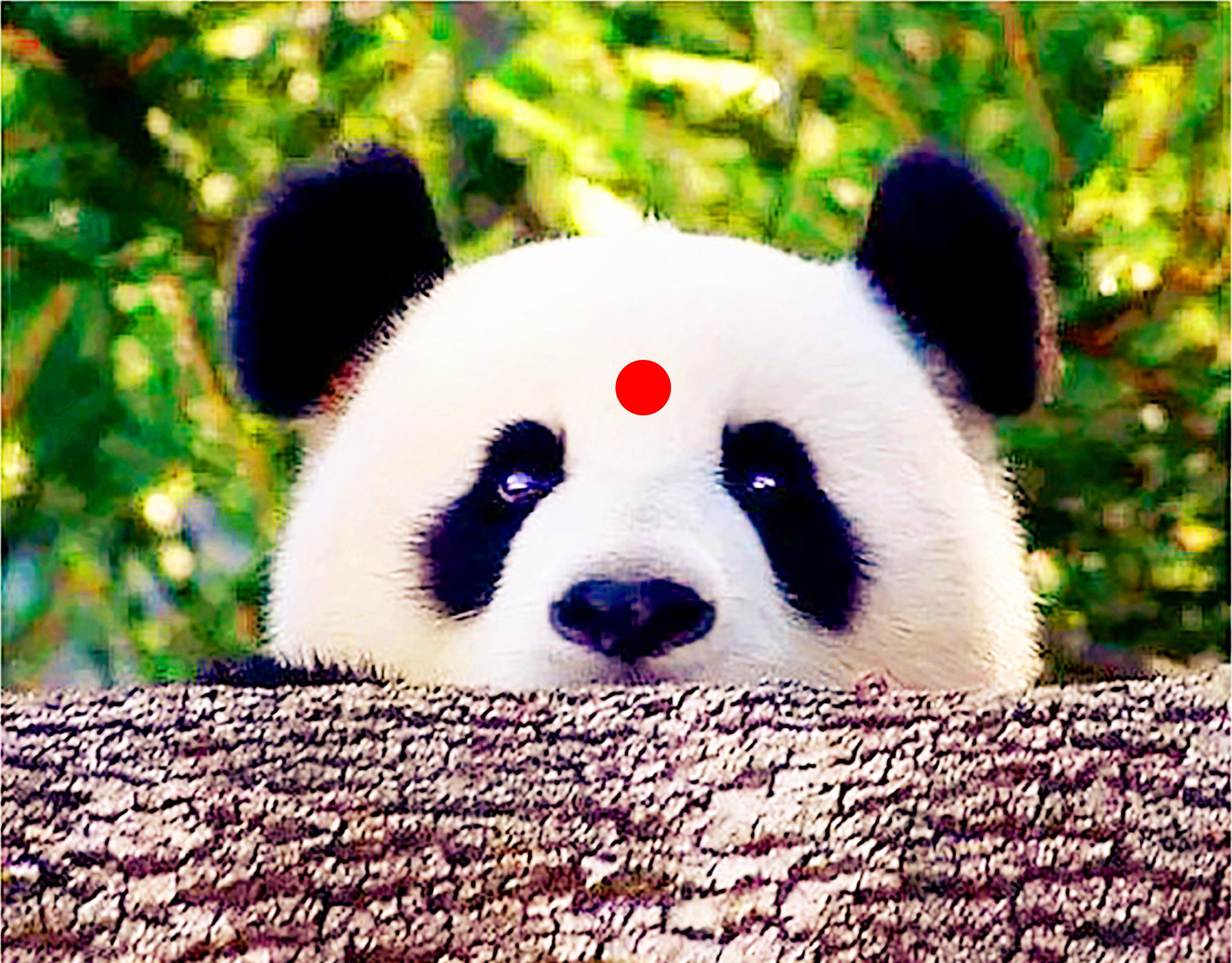 成都大熊貓繁育研究基地+都江堰景區一日遊(8點小團+分餐制美食+專車接早)