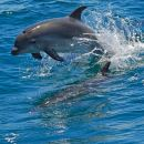 Dolphin Watching in the Wild - Half Day Boat Tour