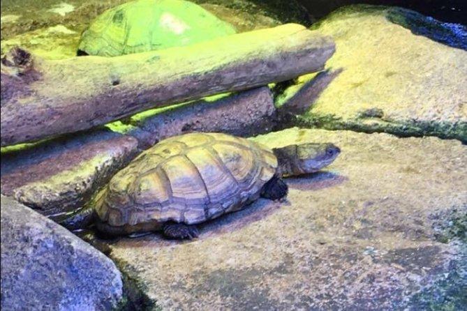 Skip the Line: Austin Aquarium Admission Ticket