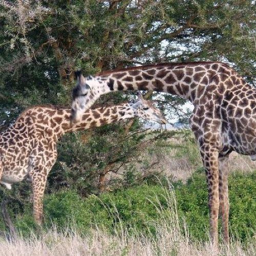 2 Days safari to Mikumi and Udzungwa Mountains from Morogoro