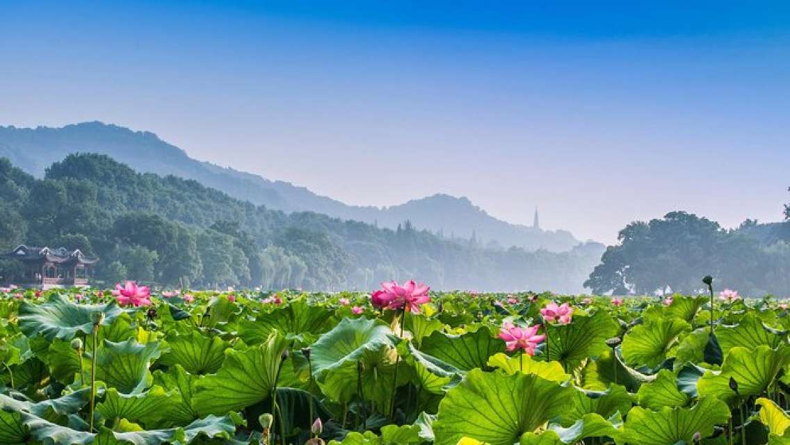 Hangzhou Private Customized Day Trip from Shanghai by Bullet Train