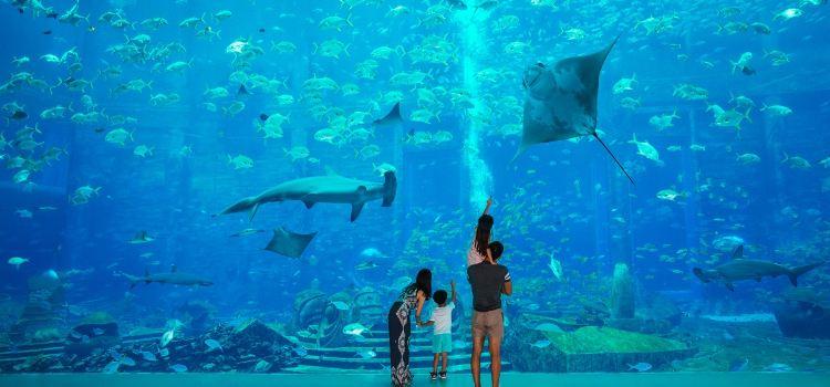 The Lost Chambers Aquarium (Sanya)