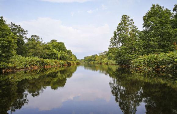 亞庇 KAWA 紅樹林一日遊(水上清真寺+螢火蟲+長鼻猴)