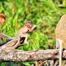 沙巴仙本那西巴丹+紅樹林海鮮餐晚餐+觀賞螢火蟲長鼻猴半日遊(享用特色下午茶)