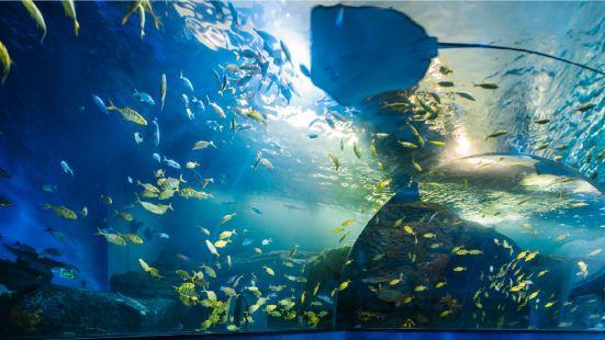 쉰룽허 톈톈완 실내 동물원