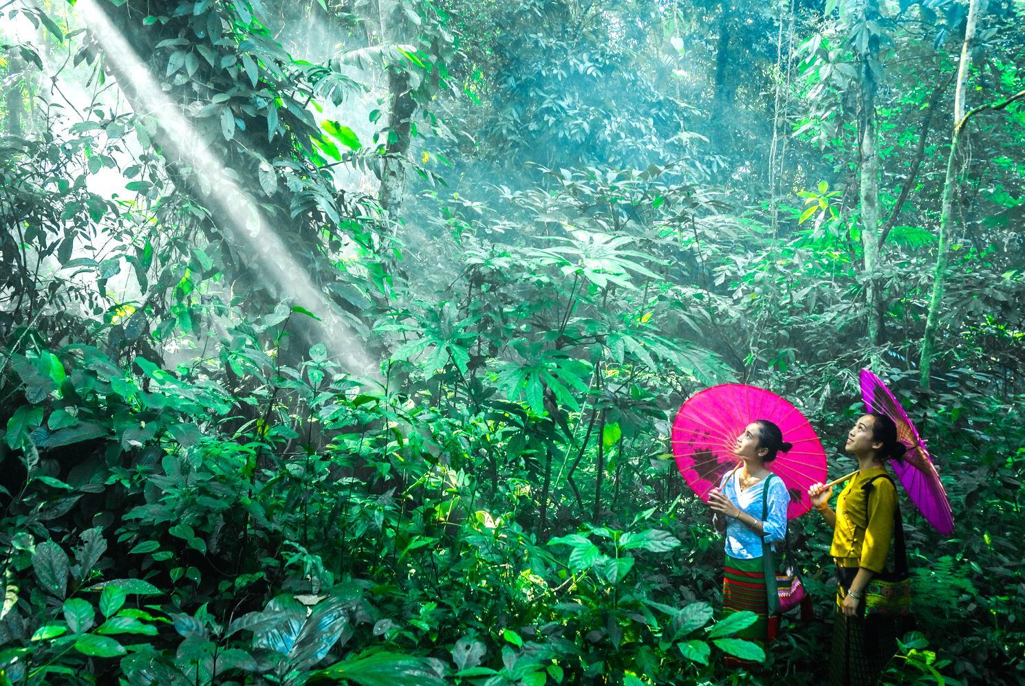 中科院西雙版納熱帶植物園一日遊(含全園電瓶車+超5小時的遊覽體驗+親子遊)