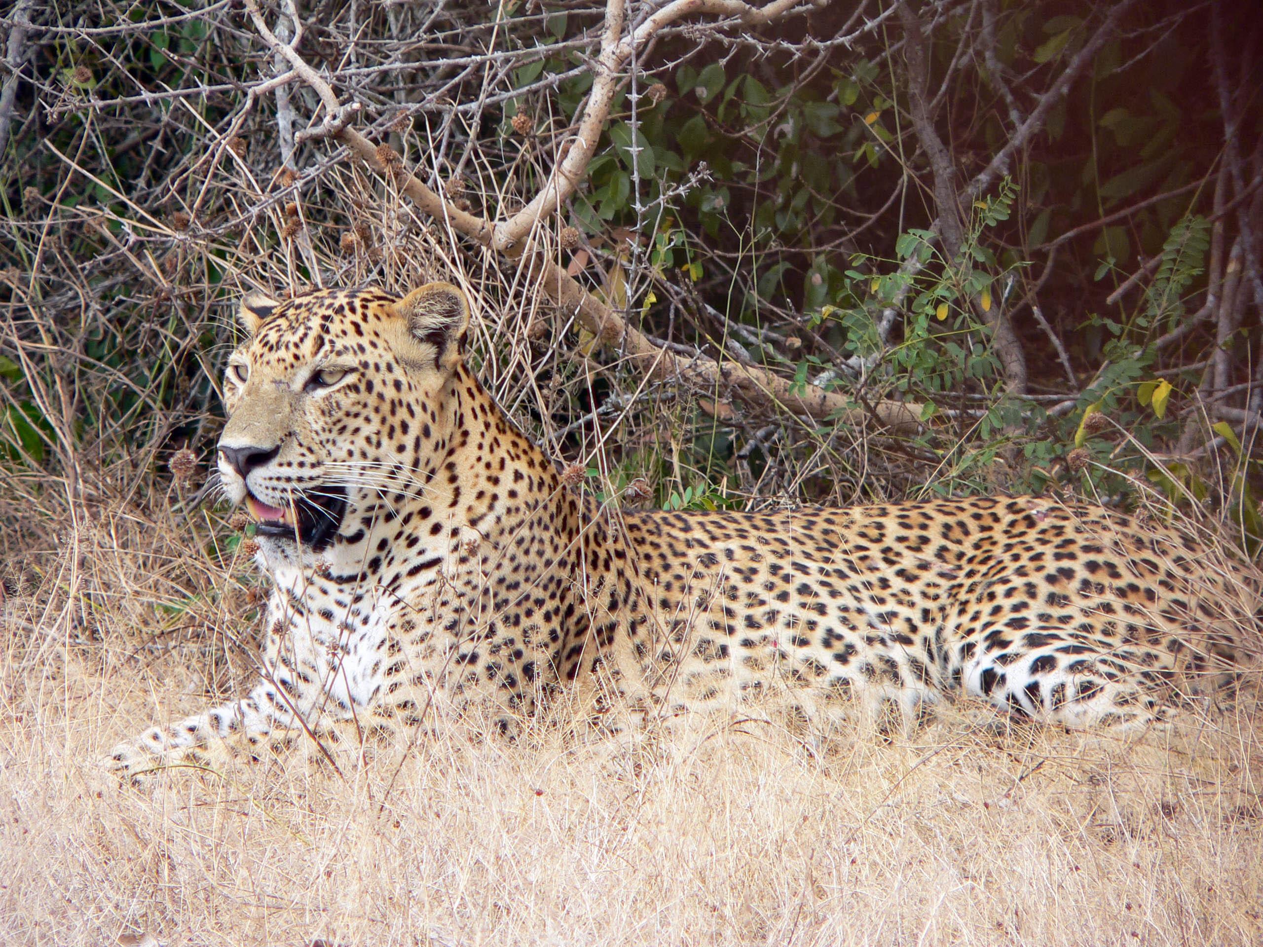 Yala National Park Private Half Day Safari in Sri Lanka