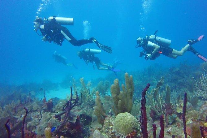 Isla Catalina Shore Excursion: 2-Tank Scuba Dive