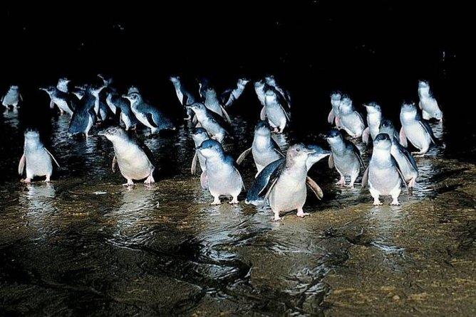 Private Phillip Island Penguin Parade Tour