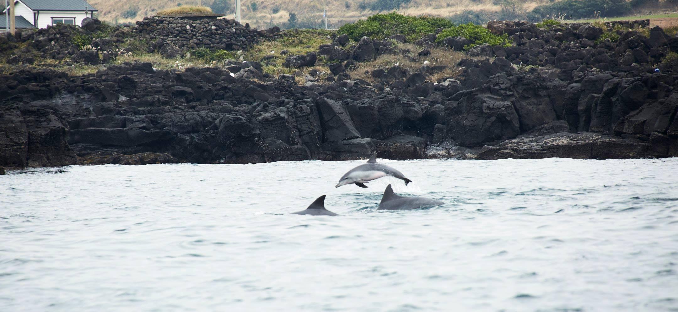 濟州島賞海豚之旅(每日出發)