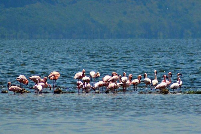 Day Tour To Lake Nakuru Park With Optional Boat Ride on Lake Naivasha