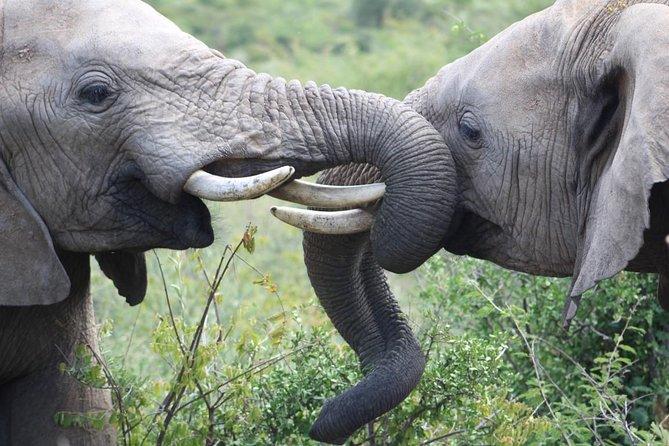 Full-Day Pilanesberg National Park Safari from Johannesburg and Pretoria