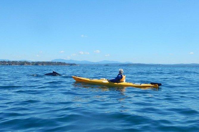 Whale Watching Kayak Tour from Batemans Bay