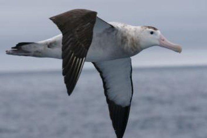 Kaikoura Albatross Encounter Tour from Christchurch
