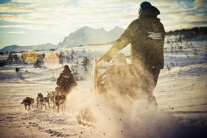 Husky Sledding Ride Including Campfire Lunch from Tromso