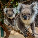 Cleland Wildlife Park Tour from Adelaide including Mount Lofty Summit
