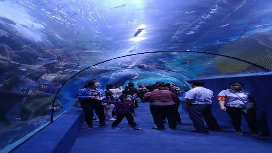 Handan Ocean Park