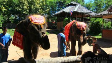 苏梅沙发里24-大象表演