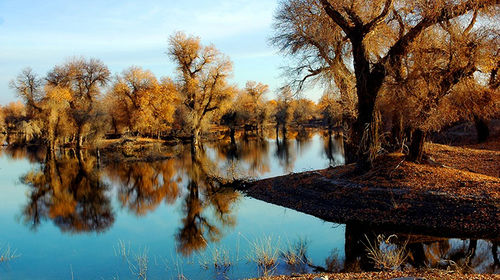 新疆轮台胡杨林 塔里木河一日游