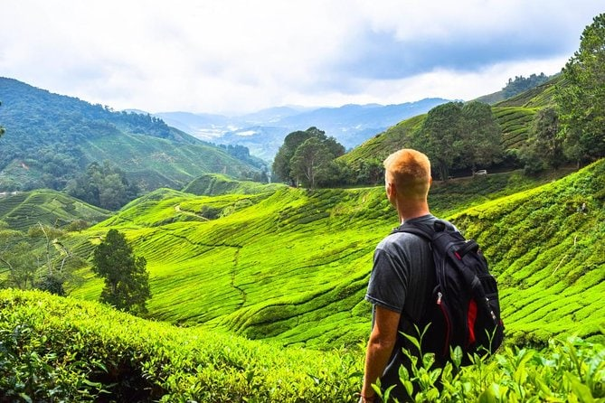 Full Day Cameron Highlands Tour from Kuala Lumpur